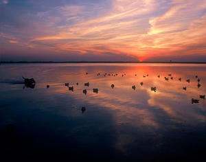 MC 177 Sunset and Texas Ducks